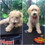 Max Before & After Groom