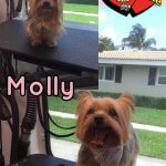 Molly Before & After Groom