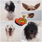 Dogs After Bath