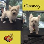 Chauncey Before & After Groom