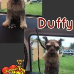Duffy Before & After Groom