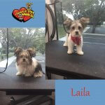 Laila Before & After Groom