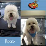 Rocco Before & After Groom