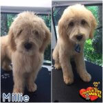 Millie Before & After Groom