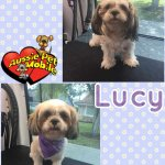 Lucy Before & After Groom