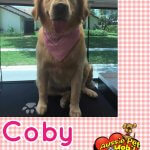 Coby Before & After Groom