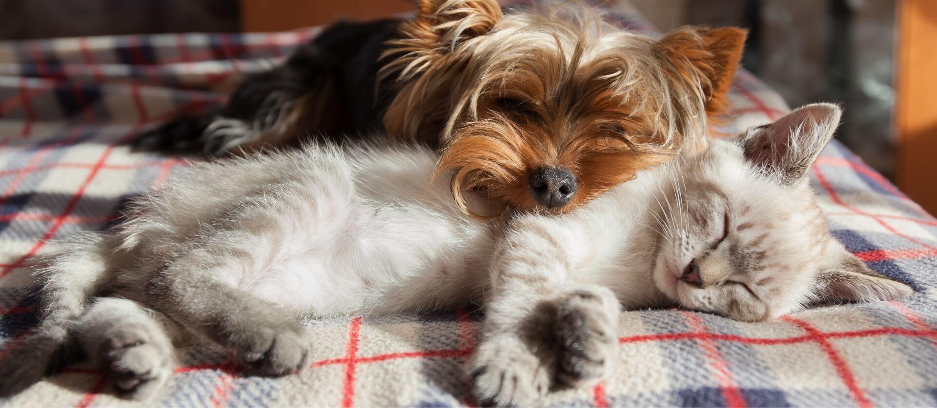 Dog Groomer With Dog